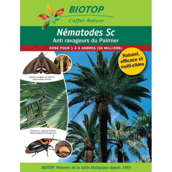 Anti-ravageurs du Palmier - NémaPalmier jusqu'à 5 arbres