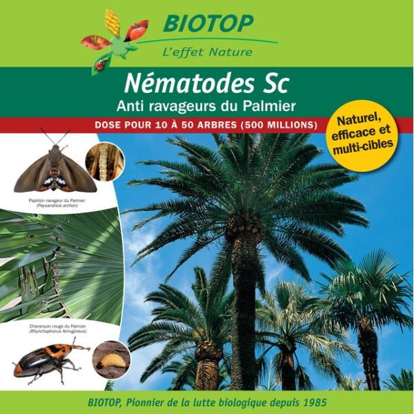 Anti-ravageurs du Palmier - NémaPalmier jusqu'à 50 arbres